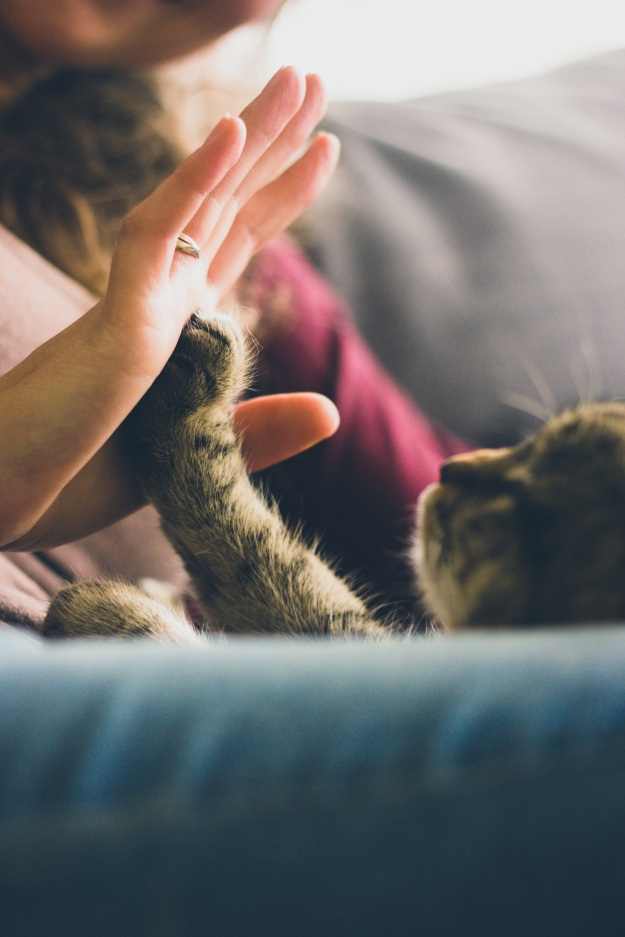 Unrelated, but what am I going to do--NOT include this picture of a cat high-five in this post?